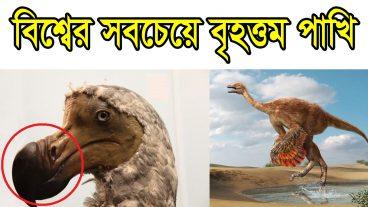 এলিফ্যান্ট বার্ড: বিশ্বের সবচেয়ে বৃহত্তম পাখি