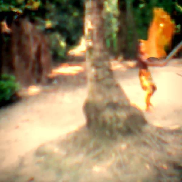 আফটার ইফেক্টস টিউটোরিয়াল [পর্ব-০৮] :: প্রয়োজনীয় প্লাগীন ১