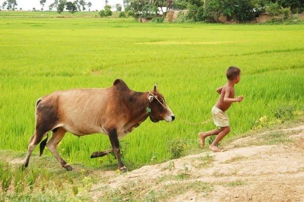 ব্লগার ভাইদের নিকট কতিপয় গুরত্বপূর্ণ প্রশ্নের উত্তর চাই